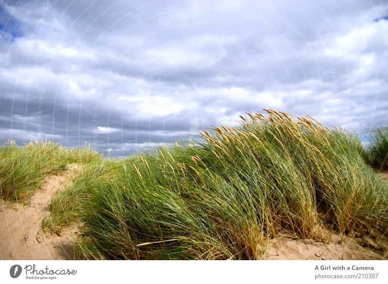 Windy inch Vacation & Travel Tourism Trip Far-off places Freedom Summer Summer vacation Beach Environment Nature Landscape Sand Air Clouds Storm clouds Grass
