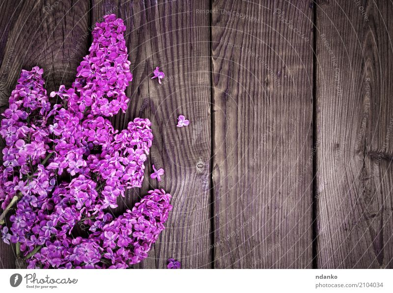 Branch of a purple lilac Beautiful Nature Plant Flower Leaf Blossom Bouquet Wood Fresh Bright Natural Brown Pink Colour blooming Lilac Floral spring