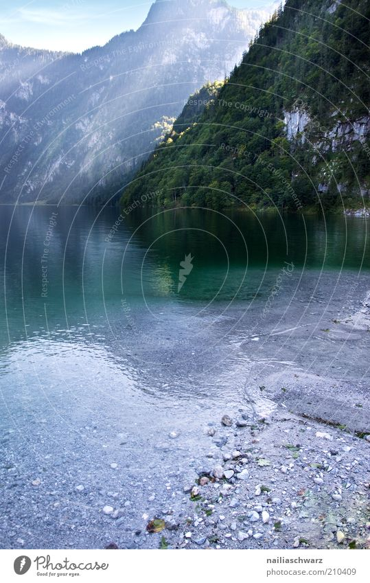 Königssee Environment Nature Landscape Water Summer Alps Mountain Lakeside Lake Königssee Blue Gray Green Colour photo Exterior shot Deserted Day Light Sunlight