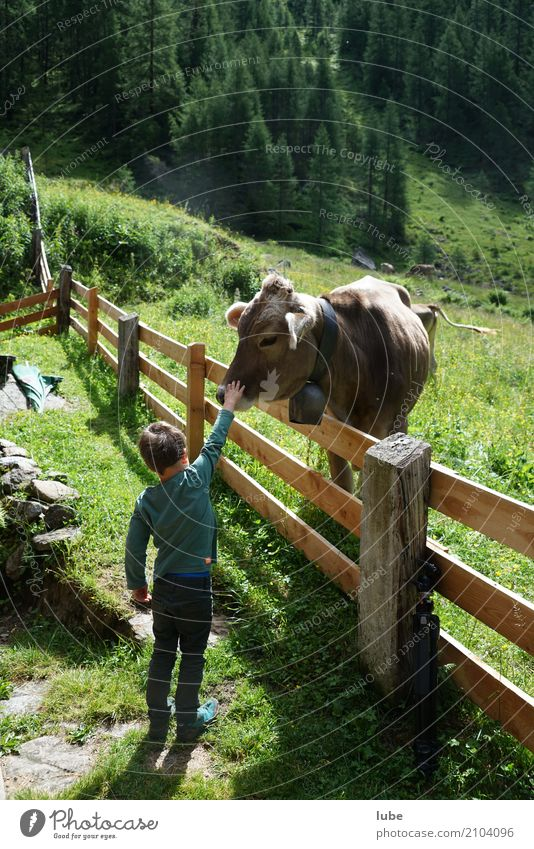 Human being Child Nature Summer Landscape Animal Mountain Environment Boy (child) Infancy Touch Agriculture Fence Cow Forestry Cattle