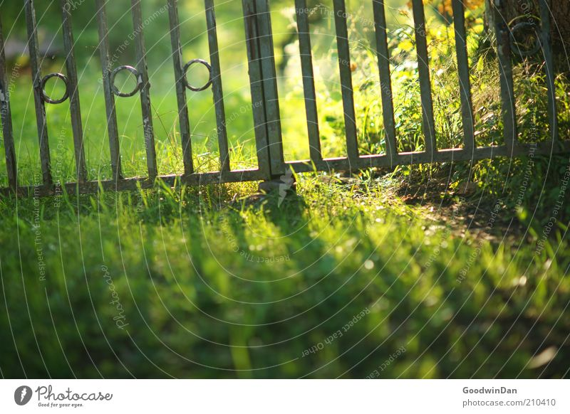 Nature Old Green Grass Brown Environment Lawn Beautiful weather Section of image Gate Exclude Garden fence Confine Metalware Surround Fenced in