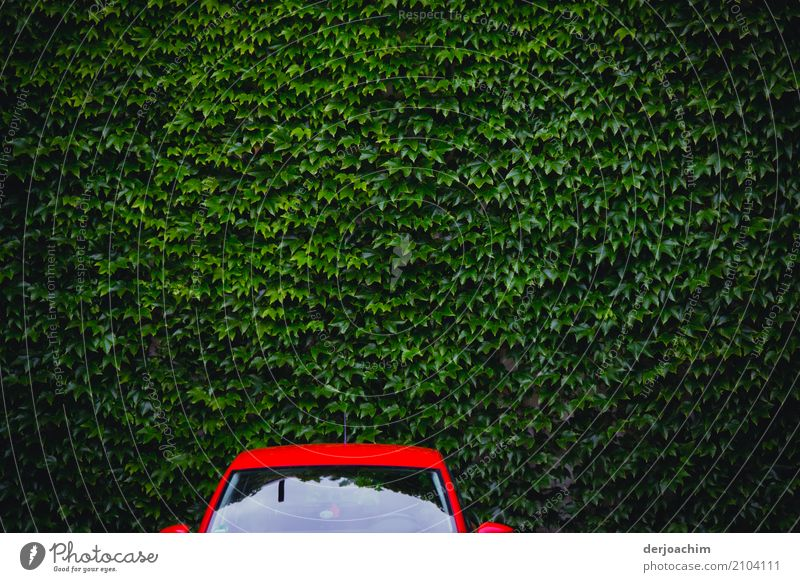 Green and Red Design Harmonious Vacation & Travel Car Animal Summer Foliage plant Parking lot Mecklenburg-Western Pomerania Germany Downtown Places Metal