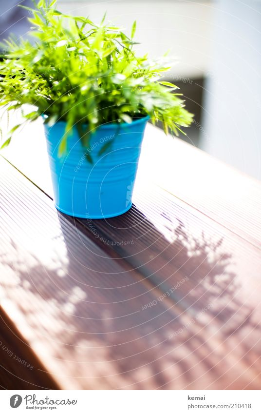 Sun Green Blue Plant Summer Leaf Table Bushes Blossoming Illuminate Wooden board Beautiful weather Bamboo Flowerpot Foliage plant Twigs and branches
