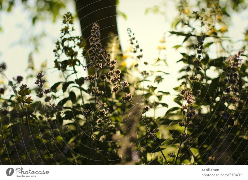 In the shade Nature Landscape Plant Sunlight Tree Flower Grass Bushes Garden Yellow Green Back-light Shade of a tree Warmth Visual spectacle Growth Colour photo