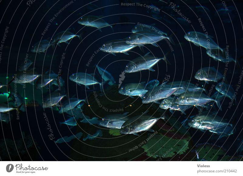 aquarium Fish Aquarium Group of animals Flock Large World's largest aquarium Colour photo Interior shot Shoal of fish