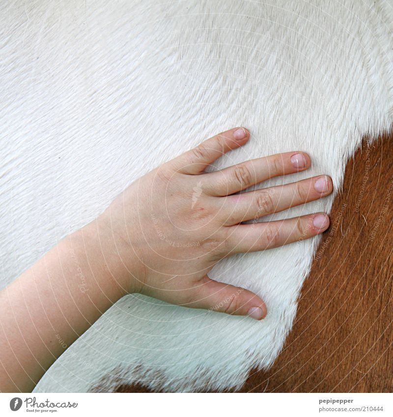 Child Hand Girl Animal Fingers Horse Clean Pelt Touch Love of animals Ride Leisure and hobbies Caress Children`s hand Groom Coat color