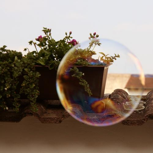 flying soap bubble flying Sky Summer Plant Flower Pot plant Terrace Blossoming Fragrance Flying Free Wet Round Multicoloured Joy Serene Soap bubble short beauty