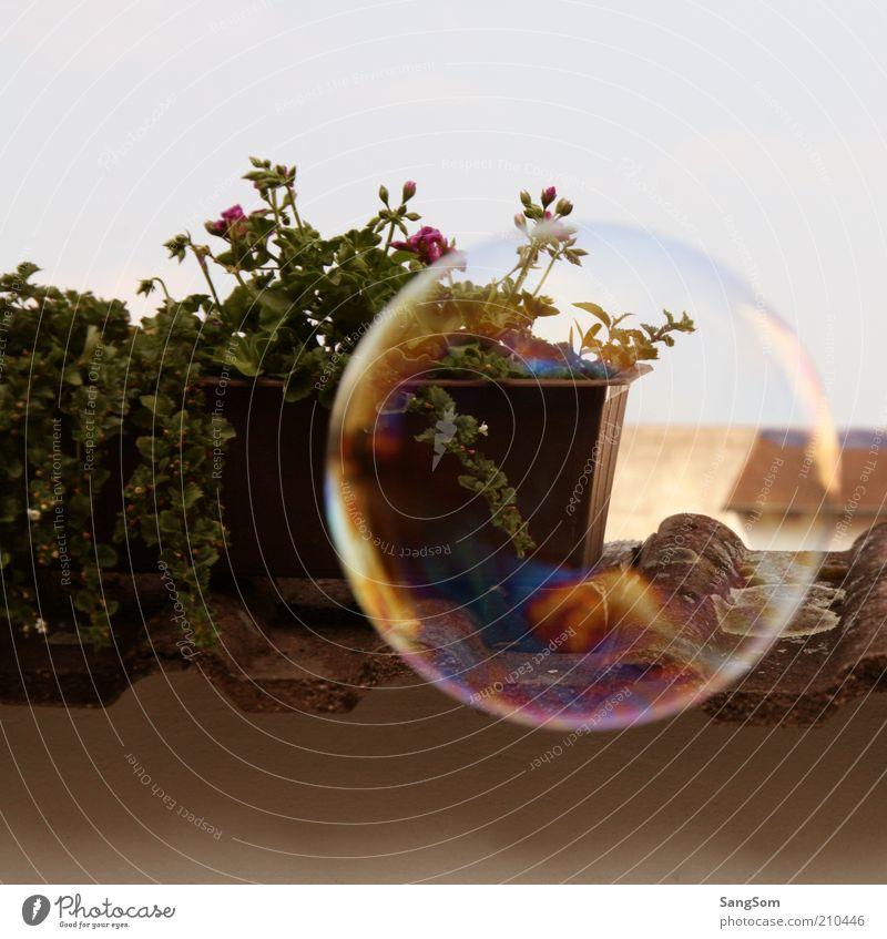 Sky Plant Summer Flower Joy Dream Air Flying Glittering Free Wet Transience Round Blossoming Serene Balcony