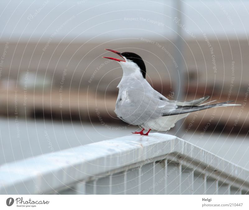 Nature Beautiful White Red Summer Animal Gray Bird Metal Environment Esthetic Stand Animal face Wing Uniqueness Natural