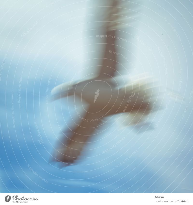 peace, seagull, sky, blurred, blue, bird Vacation & Travel Island Nature Sky Animal Wild animal Bird Sign Running Catch Flying Hunting Free Natural Speed Blue