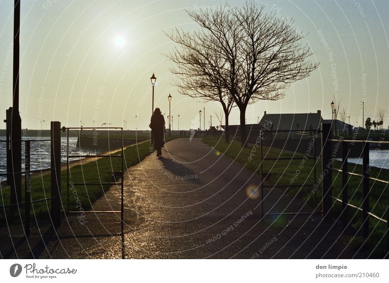 Human being Tree Sun Winter Calm Autumn Lanes & trails Contentment Moody Going Weather Trip To go for a walk Harbour Analog Bay