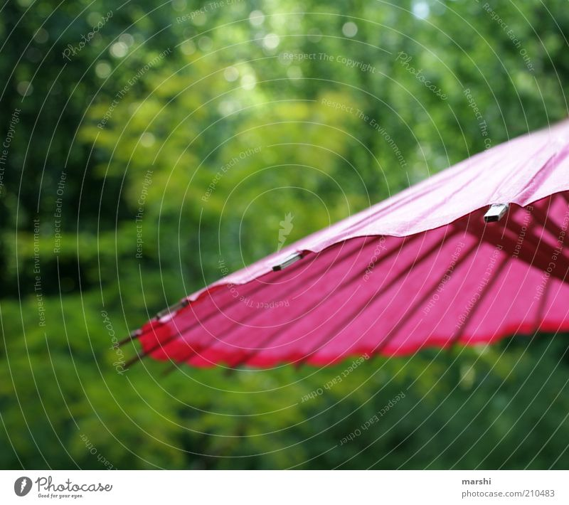 sunshining day Leisure and hobbies Garden Park Green Pink Sunshade Paper Tree Nature Summer Summery Summer's day Colour photo Exterior shot Protection
