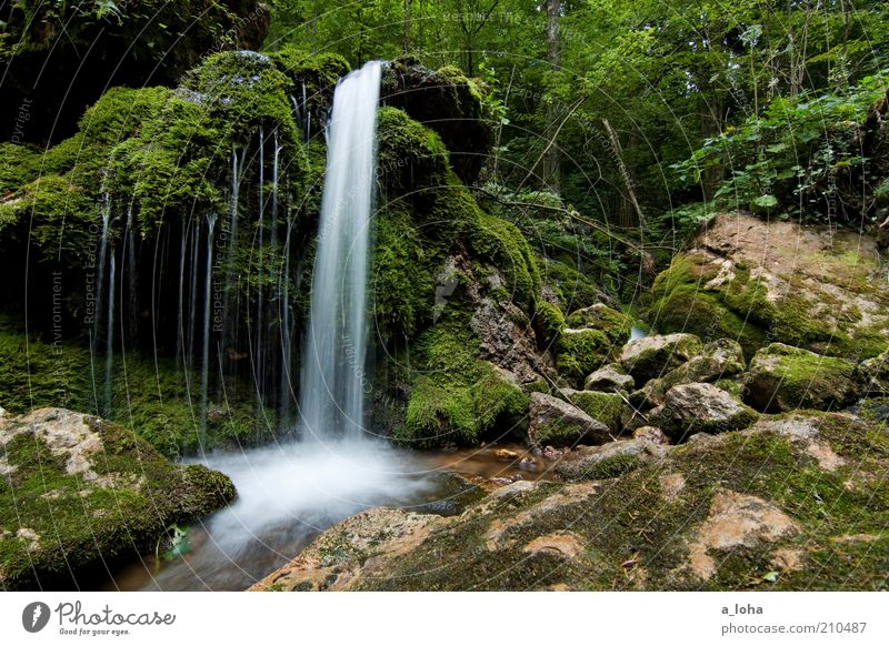 Water Tree Green Plant Forest Cold Grass Mountain Movement Line Contentment Glittering Drops of water Rock Growth River
