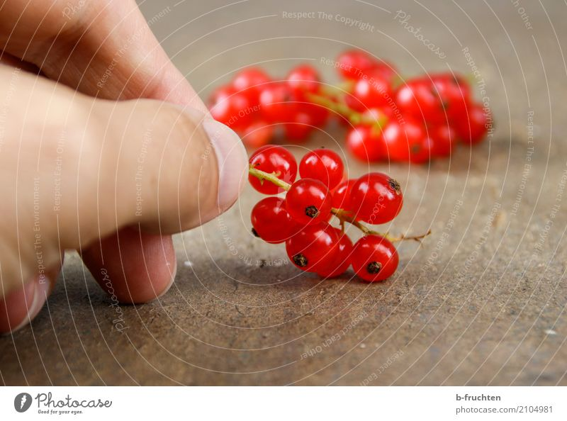 Red Currants Fruit Organic produce Vegetarian diet Diet Man Adults Fingers 30 - 45 years To hold on Fresh Healthy Beginning To enjoy Redcurrant Blossom Board