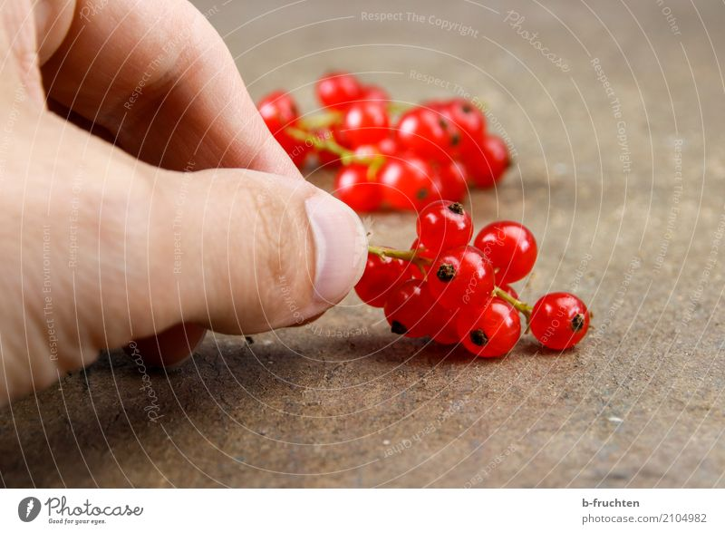small vitamins Fruit Organic produce Vegetarian diet Diet Man Adults Hand Fingers 30 - 45 years To hold on Happiness Fresh Healthy Red Redcurrant Blossom