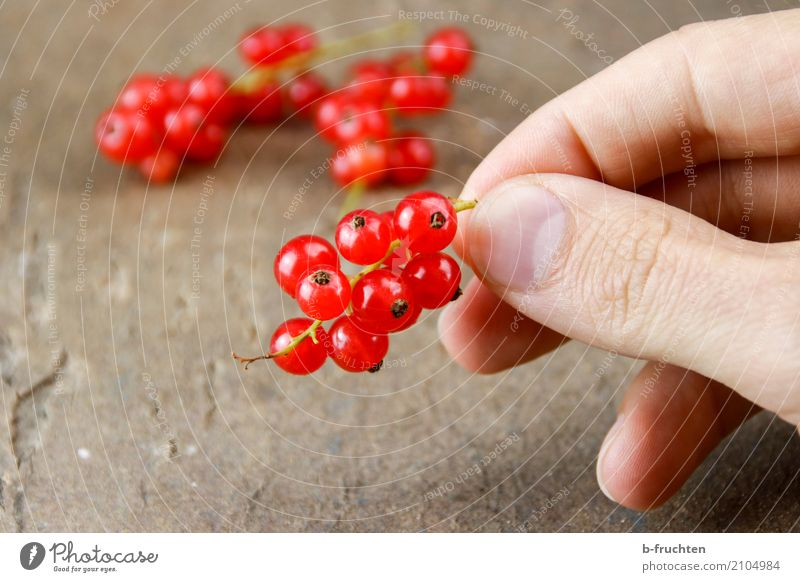 Man Red Adults Blossom Healthy Wood Fruit Fresh To enjoy Table Fingers To hold on Candy Harvest Berries Mature