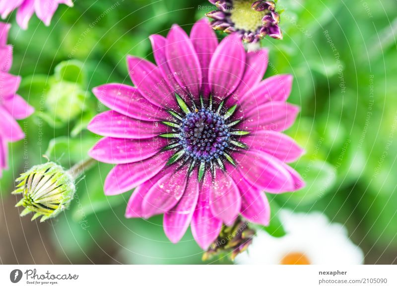Flower blossom pink Environment Nature Plant Spring Leaf Blossom Foliage plant Gerbera Garden Park Blossoming Fragrance Discover Relaxation Looking Illuminate