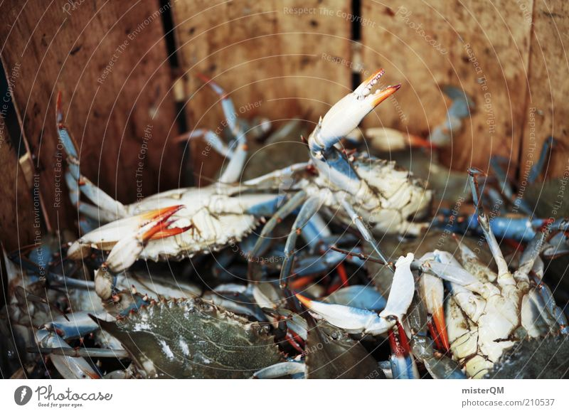 Mr Krabs? Animal Shrimp Nutrition Marine animal Fishery Many Fishing quota Crustacean Delicacy Seafood The deep Overfishing Fish market Fish dish Fresh
