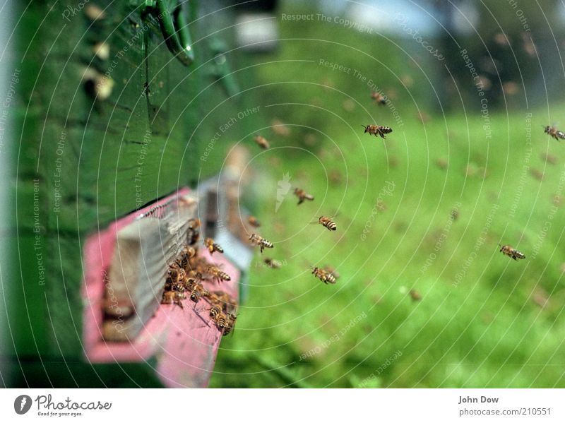 Summer Air Flying Bee Many Hover Honey Diligent Floating Flock Animal Food Blur Accumulate Buzz