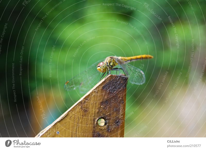 Green Calm Animal Yellow Relaxation Freedom Gold Sit Break Authentic Wing Delicate Natural Rust Fragile Dragonfly