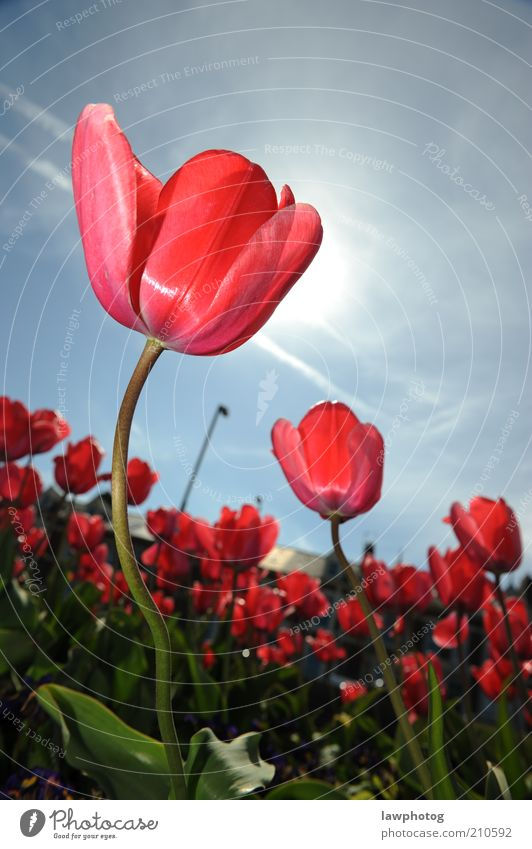 dancing in the sun Nature Beautiful Sky Sun Flower Blue Plant Red Blossom Grass Spring Garden Pink Beautiful weather