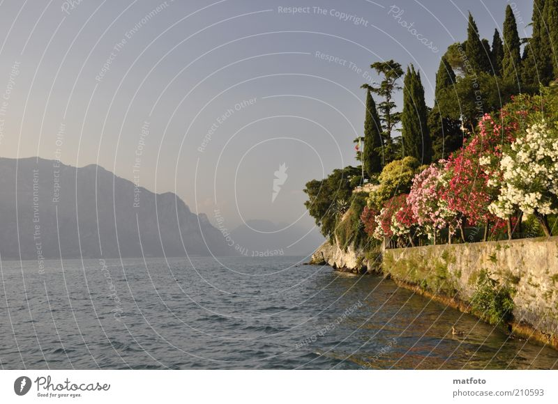 Summer at Lake Garda ! Vacation & Travel Summer vacation Mountain Landscape Water Sunlight Beautiful weather Lakeside Blue Wanderlust Colour photo Exterior shot