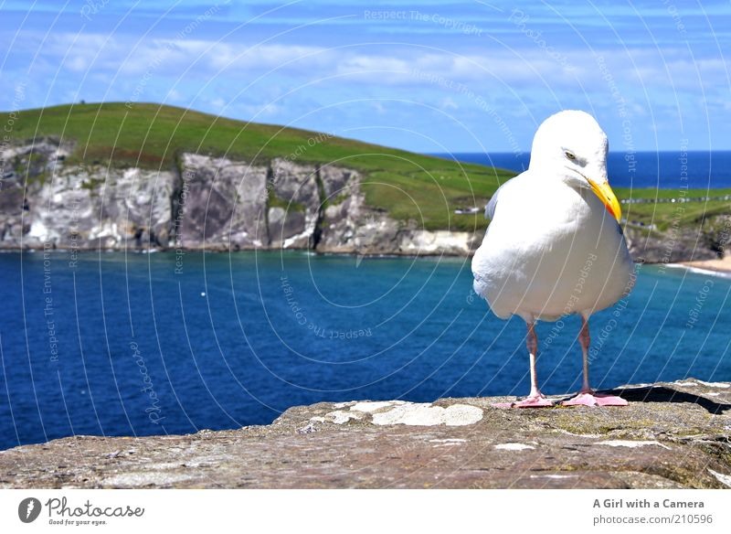 Sky Blue Water White Green Beautiful Vacation & Travel Ocean Animal Calm Landscape Freedom Coast Stone Bird Contentment