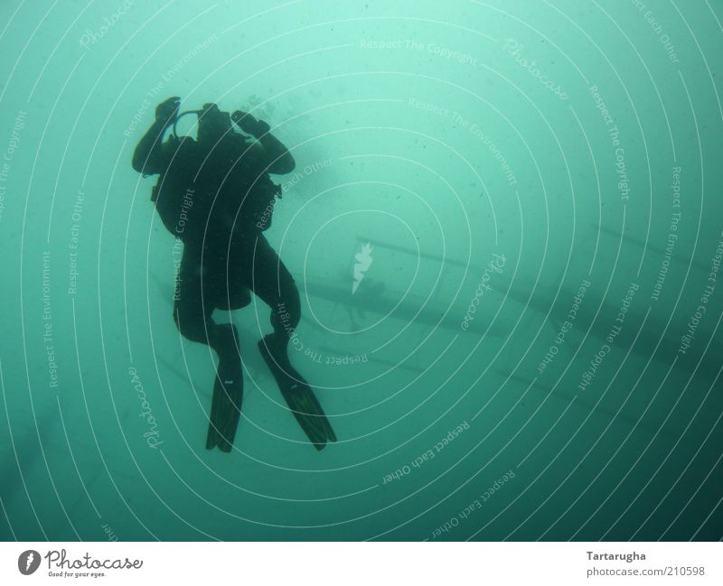 Frogman Leisure and hobbies Adventure Far-off places Ocean Sports Aquatics Dive Human being 1 Water Summer coron Philippines South East Asia Australia + Oceania