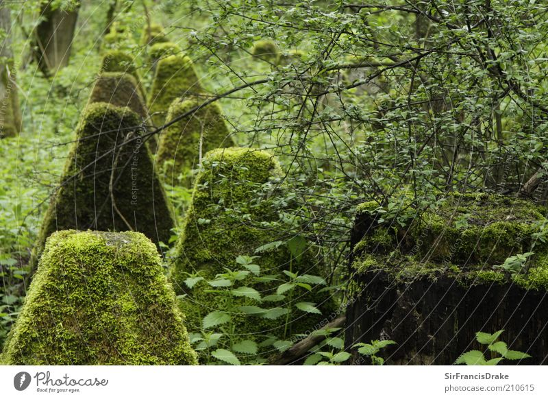 Forgotten witnesses... Nature Landscape Bushes Moss Leaf Concrete Protection Peaceful Calm End Past Forget Colour photo Exterior shot Deserted Day Shadow