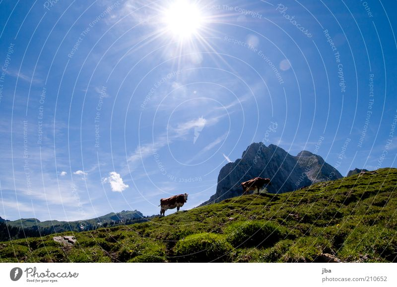 Sky Nature Vacation & Travel Sun Summer Animal Mountain Freedom Air Leisure and hobbies Hiking Stand Idyll Alps Pasture Peak