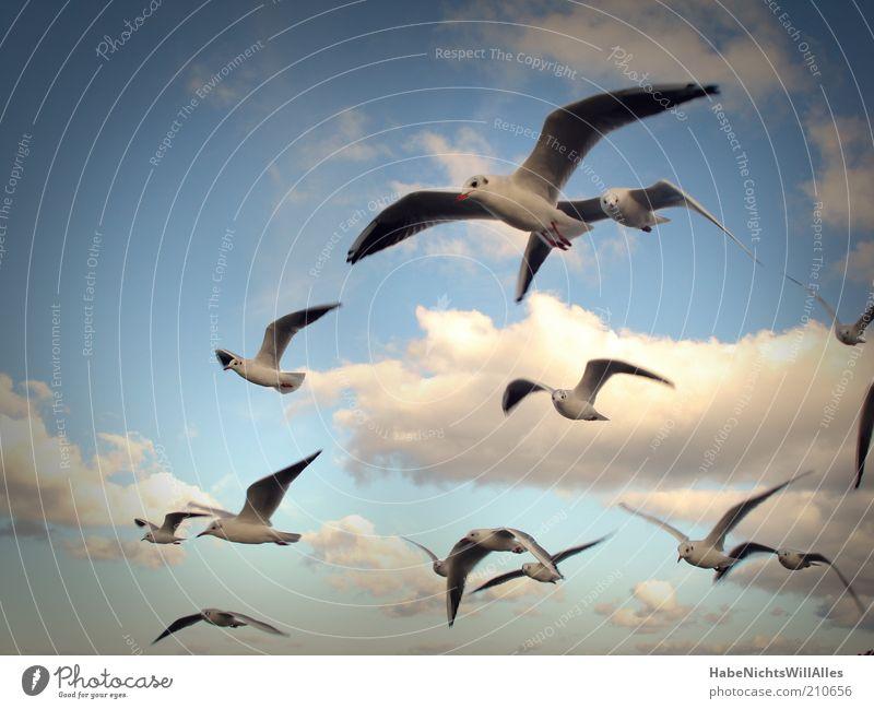 Möwenpick squadron Freedom Nature Animal Air Sky Clouds Wind Coast Baltic Sea Ocean Wild animal Bird Wing Seagull Flock Ease Curiosity Glide Colour photo