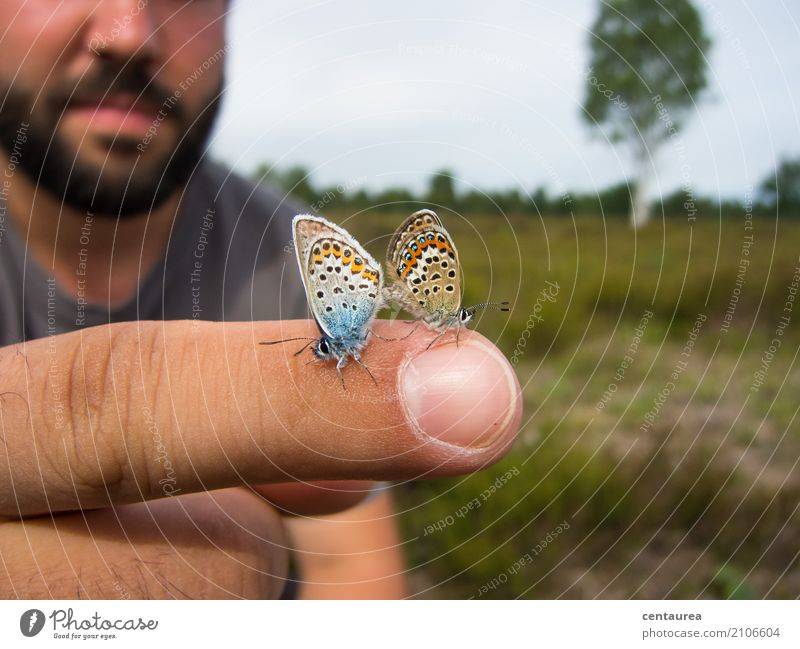 Pair on the finger Nature Animal Summer Beautiful weather Garden Park Meadow Field Heathland Wild animal Butterfly 2 Pair of animals Observe Free Blue Brown