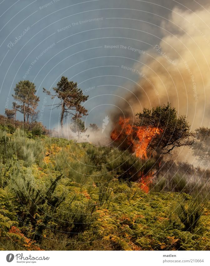 Tierra del Fuego Nature Landscape Fire Summer Tree Grass Bushes Forest Mountain Smoke Disaster Threat Flame Warmth Colour photo Exterior shot Deserted