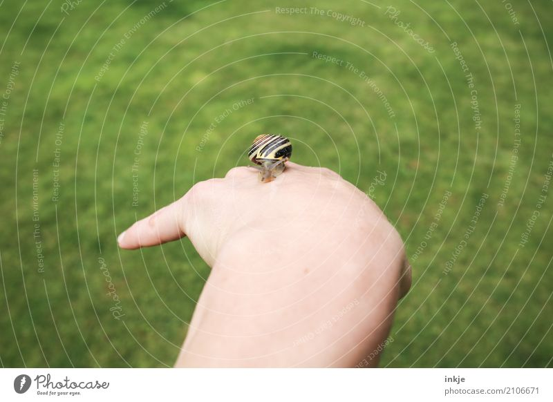 hand-tame 1 Hand Meadow Snail Animal Observe To hold on Small Near Natural Curiosity Cute Trust Love of animals Peaceful Attentive Caution Interest Nature