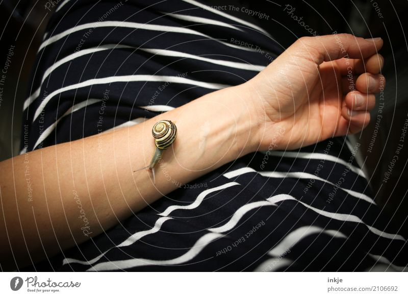 Human being Animal Calm Small Line Wild animal Arm Observe Dress T-shirt Cloth Caution Snail Striped Crawl Patient