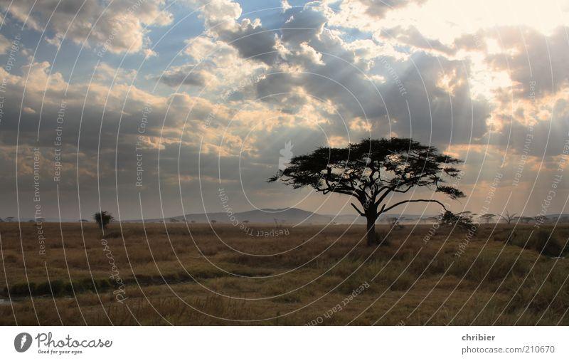 Adieu, Serengeti... Relaxation Calm Environment Nature Landscape Plant Clouds Horizon Tree Grass Acacia Park Hill Steppe Savannah Discover Dark Infinity Longing