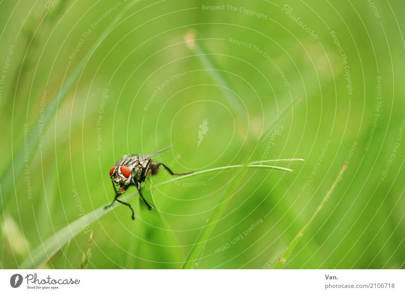 Good morning! Good morning! Nature Plant Animal Summer Grass Garden Meadow Wild animal Fly Insect 1 Small Green Red Colour photo Multicoloured Exterior shot