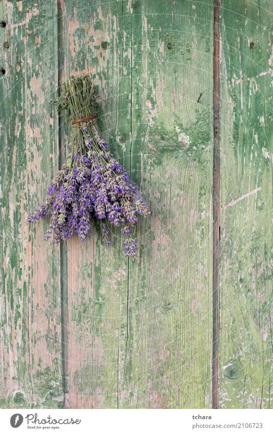 Lavender Herbs and spices Design Decoration Nature Plant Flower Leaf Blossom Bouquet Wood Old Fresh Natural Brown Green door Consistency Antique wall vintage