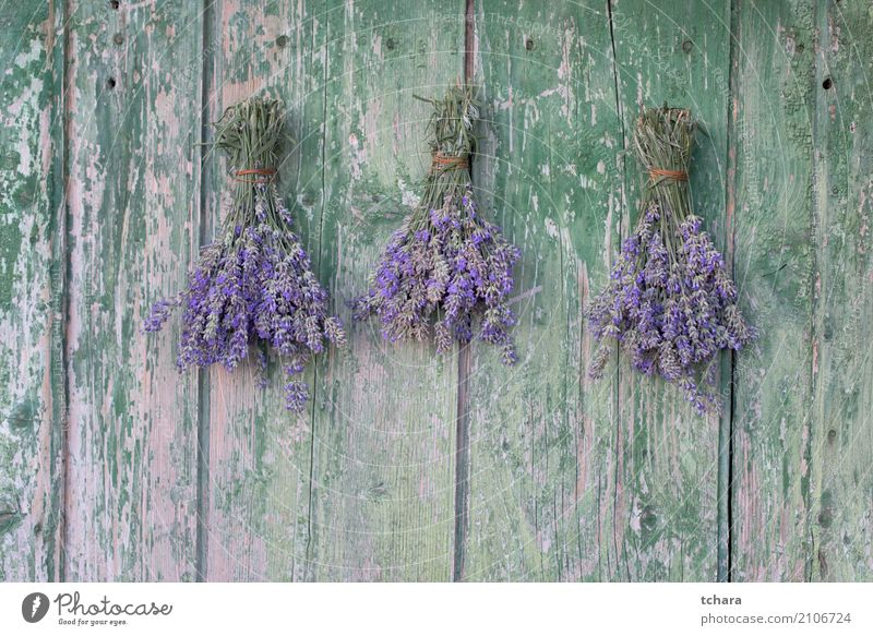 Lavender Perfume Health care Nature Plant Summer Flower Leaf Blossom Wood Ornament Old Fresh Natural Green Violet Purple Beauty Photography herbal bunch healthy