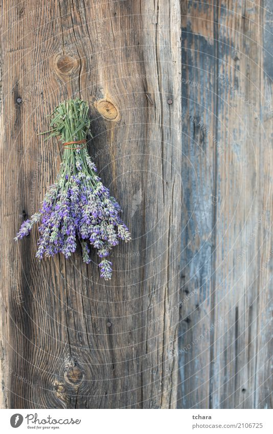 """Lavender Nature Plant Flower Leaf Blossom Fresh Natural Green Purple Beauty Photography herbal bunch healthy Floral Organic medicine """"herb,"""" Violet Old Wood"""