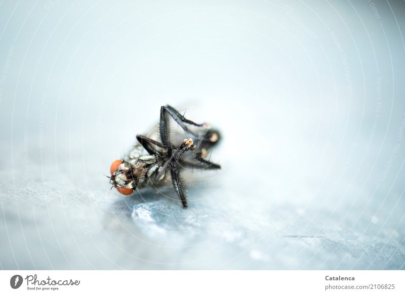 Irreparable broken. Garden Window board Insect Fly 1 Animal Metal Lie To dry up Dry Brown Gold Orange Black Silver Death Exhaustion End dead fly Colour photo