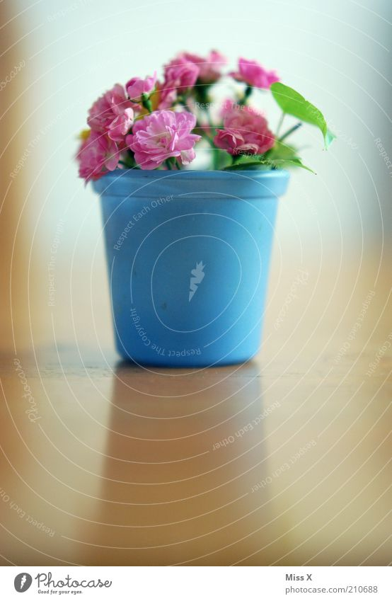 Plant Flower Summer Blossom Pink Living or residing Rose Decoration Blossoming Bouquet Fragrance Vase Flowerpot Faded Mother's Day To dry up
