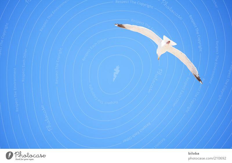 Sky White Summer Animal Life Freedom Happy Air Bird Flying Hope Wing Joie de vivre (Vitality) Breathe Seagull