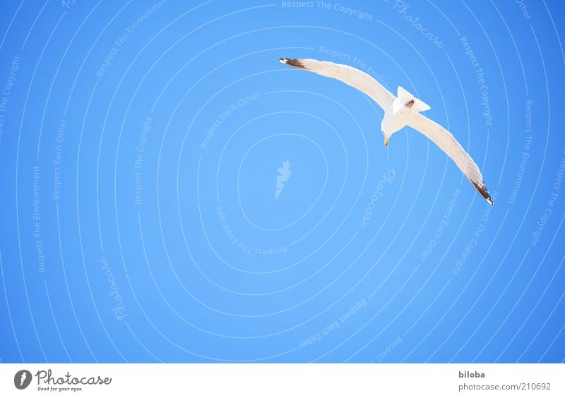 Sky White Summer Animal Life Freedom Happy Air Bird Flying Hope Wing Joie de vivre (Vitality) Breathe Seagull