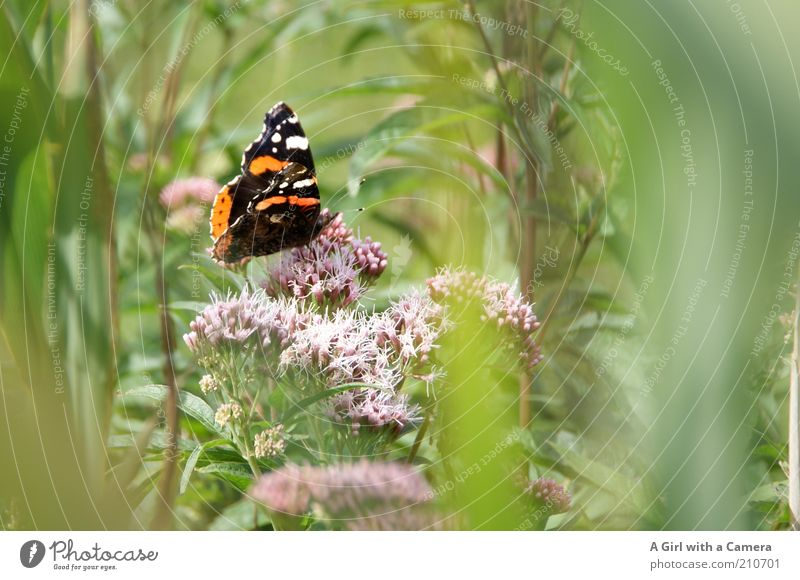 Nature White Beautiful Plant Summer Flower Animal Black Environment Freedom Grass Orange Bushes Uniqueness Beautiful weather Insect