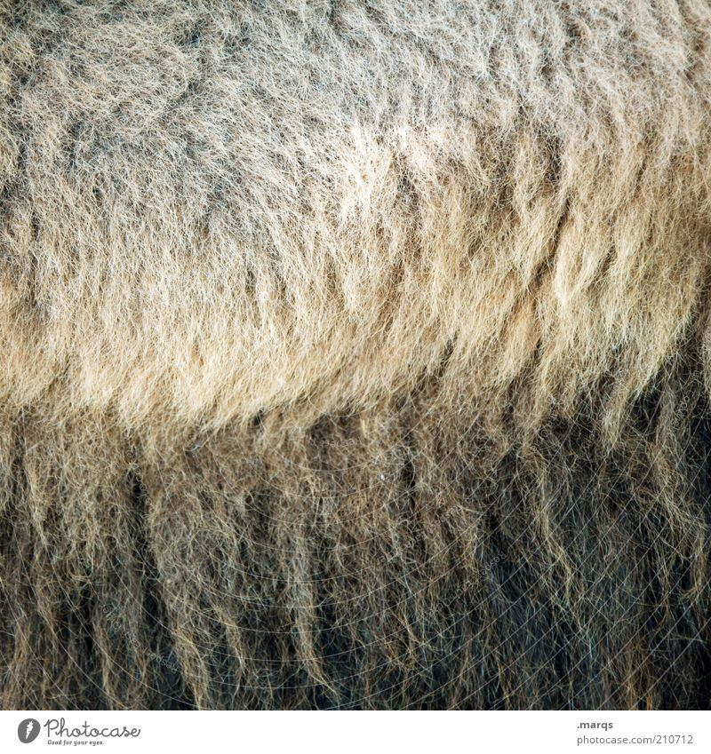 Beautiful Black Brown Soft Pelt Exotic Cuddly Safety (feeling of) Wool Structures and shapes Lush Camel Light