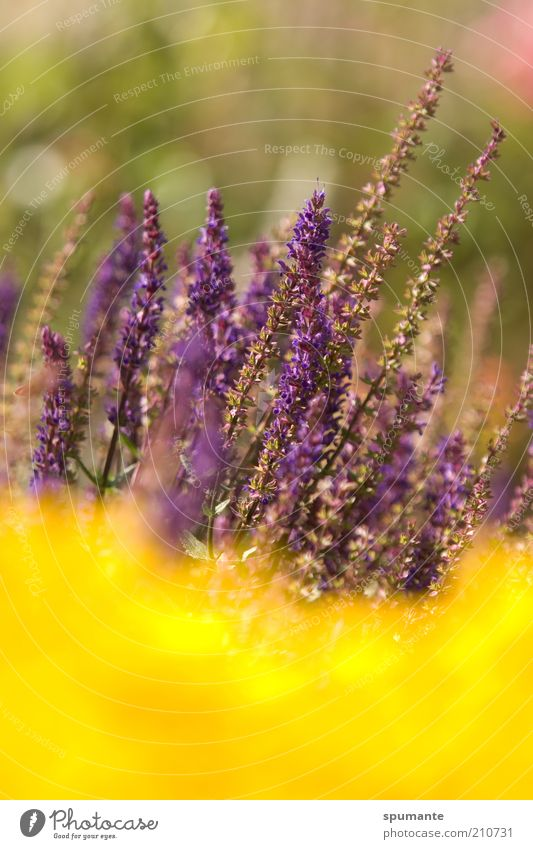 Nature Beautiful Flower Plant Summer Yellow Life Blossom Garden Warmth Gold Growth Violet Leisure and hobbies Delicate