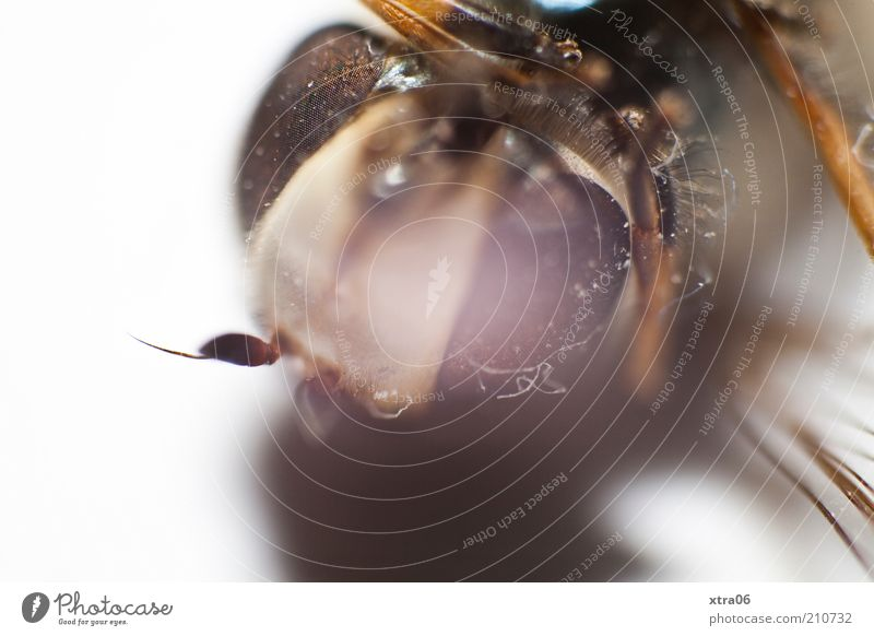 Eyes Animal Authentic Insect Feeler Macro (Extreme close-up) Compound eye