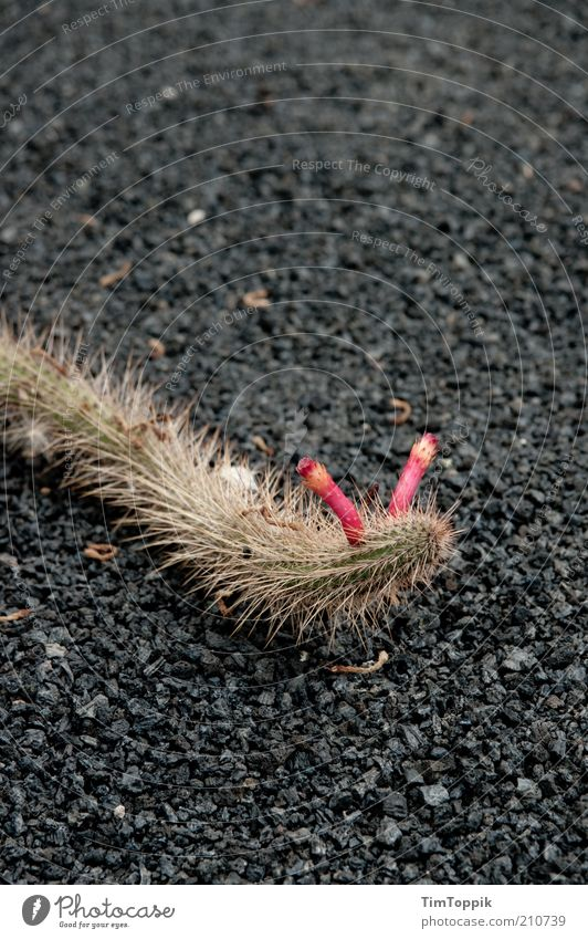 Plant Red Animal Pink Asphalt Lanes & trails Bird's-eye view Antlers Feeler Snake Crawl Cactus Thorn Slowly Worm Caterpillar