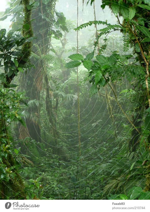pandora Nature Plant Fog Tree Bushes Moss Foliage plant Wild plant Exotic Forest Virgin forest Cloud forest Shroud of fog Misty atmosphere Green Mystic